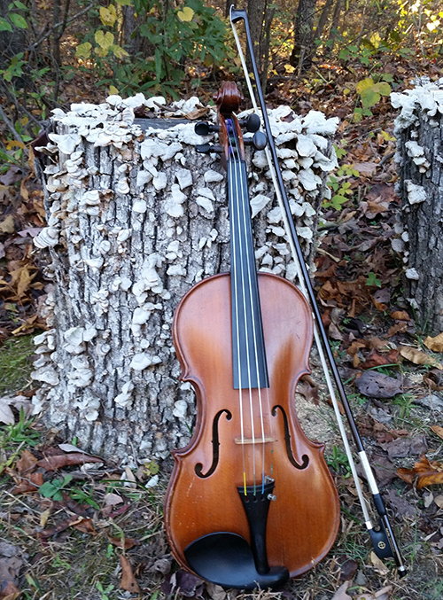 Violin on log
